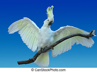 LIfelike cockatoo - Life-like cockatoo - this is a taxidermy