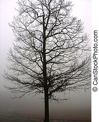 lone tree in fog - lone tree at state university in ma