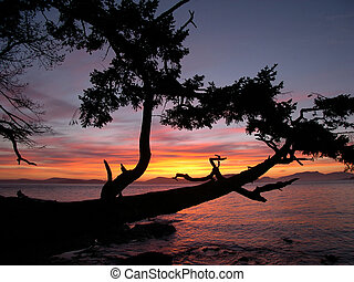 Sunset 1 - sunset on the bay overlooking a tree