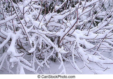Snowy Branches Background