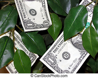 Money Grows on Trees! - The money grows on trees concept .....