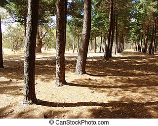 Forest Shadows - Tree shadows in Kaitpo Forest South...