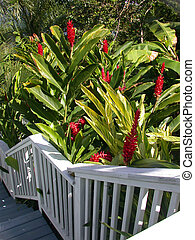 Garden Steps - Garden in St Thomas, US Virgin Isle