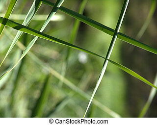 nature abstract - close up of some flora