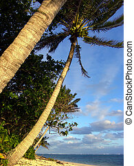 Palm Tree in Rarotonga