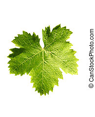 vine leaf - green vine leaf