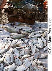Fish - A catch of shari at the informal morning fish market...