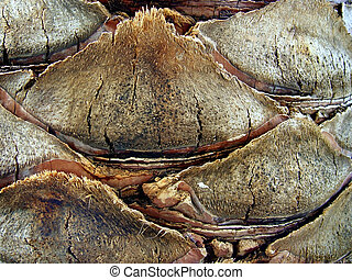 Bark background - Palm tree bark background