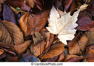 Fall Leaves - Pile of colorful fall leaves of different...