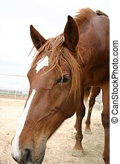 Why the long face - Very long sharp horse face closeup