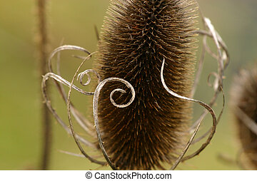 artistic thistle - Macro photo of an artistic tlooking...