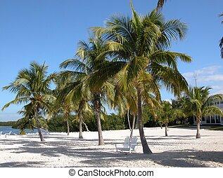 Beach Islamorada Fl - Photographed on a beach at Islamorada...
