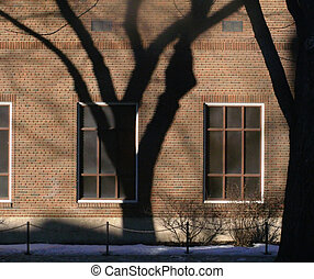 Tree Shadow - Shadow of a tree in downtown Edmonton. Taken...