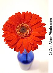 Pop - Red flower in blue vase, from above, using fish-eye...
