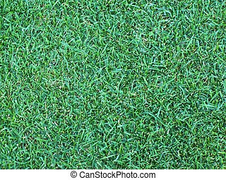 Grass Background - Background golf course