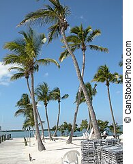 Beach Islamorada Fl - Photographed at a Beach Islamorada Fl