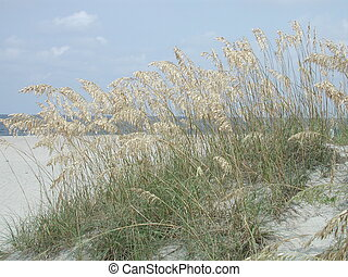 Sea Oats - Photographed Sea Oats on the beach at Tybee...