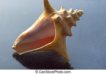 Pink Shell - Helical shell