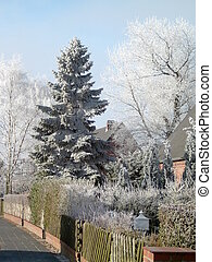 Winter tree - Tree in a german garden neighbourhood