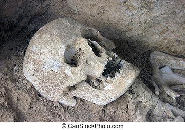 prehistórico, cráneo