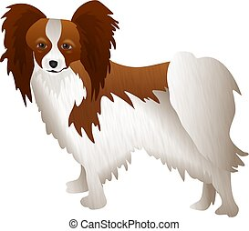 Papillon - dog breed