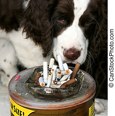 Disapproving look - Dog disgusted by cigarette butts