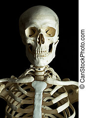 Skeleton 2 - Human skeleton on a black background