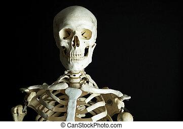 3, esqueleto