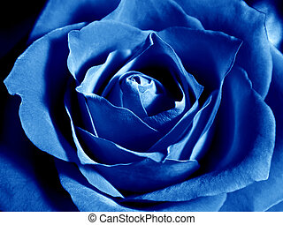 Deep blue rose - Rose core zoom in - deep blue