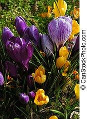 Spring - flowers in spring