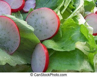 ravanello, verde, insalata,  &
