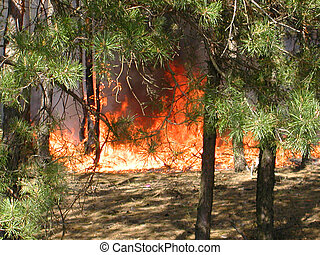 Fire - Forest fire