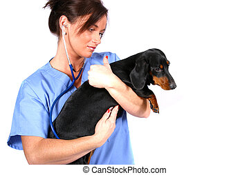 Vet with Dog - vet with Dig