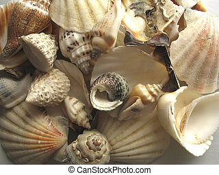 The shell - The Shell from my sea
