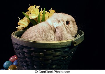 Bunny in Basket - Mini Lop bunny sitting in Easter basket...