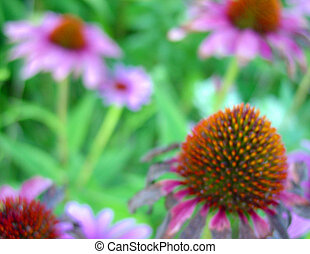 Wild Flowers 2 - patch wild cone flowers in mid west