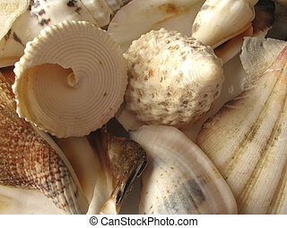 The Shells of Adriatic Sea