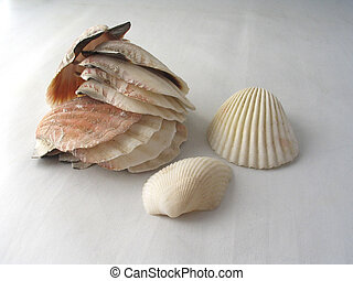 The Shells - The shells of Adriatic Sea