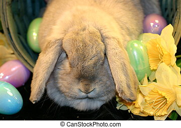 Easter Bunny 6 - Easter Bunny with Eggs and Flowers
