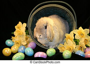 Bunny in Basket 3 - Easter Bunny in basket framed by...