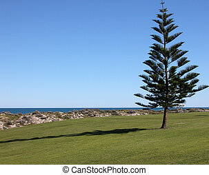 Lone Tree by the Park, Australia