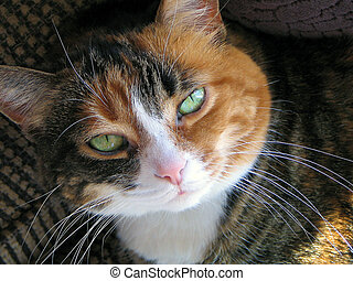 Calico Cat - close up shot of calico cat in the sun