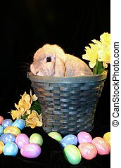 Easter 2 - Easter bunny sitting in Easter basket surrounded...