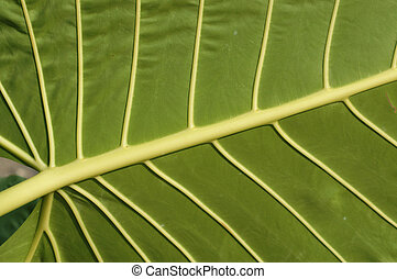 Leaf - Underneath of a Gigantic Leaf