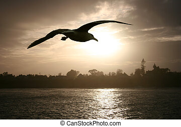 Sea gull at sunset - Sea gull flying over the ocean at...