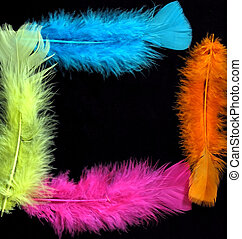 Feather Frame - Colorful feather border on black