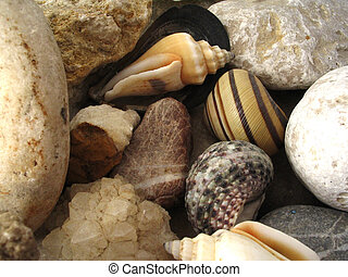 The Small Stones and Shells