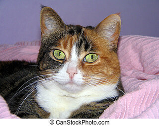 Pastel Cat - Calico cat relaxing in pink chenile blanket