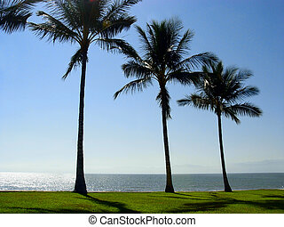 Three palm trees at the beach