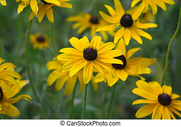 Pick Me - Photos of flowers were taken in Elk Grove Village,...